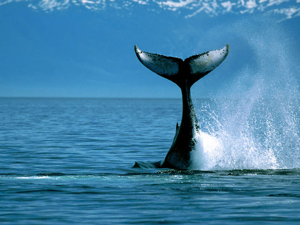 WINTER WHALE WATCHING SPECIAL @ RESORT ON THE BEACH 2214/15