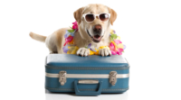 PET ACCOMMODATION IN PORT STEPHENS